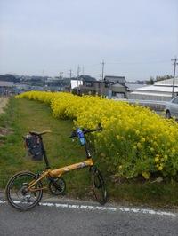 20090308_nanohana