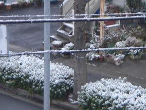 20091219_snow