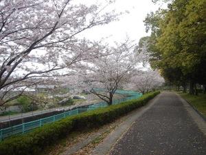 20100411_sakura1