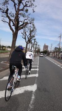 20121104_chitamusume3