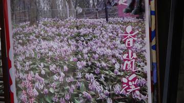 201140321_katoya4