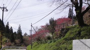 2015018_otagamomo_21